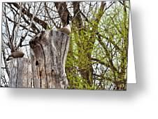 Goose Tree Greeting Card