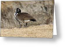 Goose With Head Cocked  Greeting Card