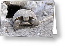 Gopher Tortoise Greeting Card