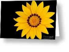 Gorgeous Gazania Greeting Card