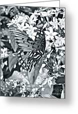 Gorgeous Gulf Fritillary Greeting Card