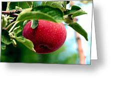 Gorgeous Red Apple Greeting Card