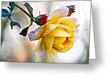 Gorgeous Roses Greeting Card
