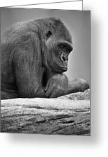 Gorilla Portrait Greeting Card