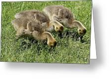 Goslings 1 Greeting Card