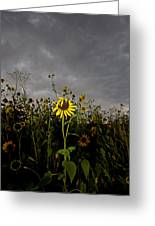 Goth Sunflower Greeting Card