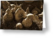 Gourds In Sepia Greeting Card