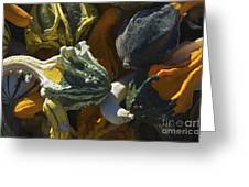 Gourds No.1 Greeting Card