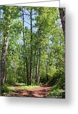 Graceful Aspen Poplars Greeting Card