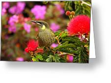 Graceful Honeyeater Greeting Card