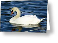 Graceful Reflections - Mute Swan Greeting Card