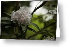 Gracefully Lit Greeting Card