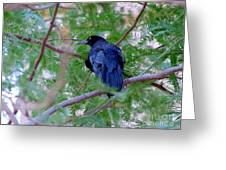 Grackle On A Branch Greeting Card