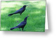 Grackles In The Yard Greeting Card