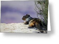 Grand Canyon Squirrel Greeting Card
