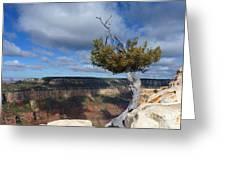 Grand Canyon Struggling Tree Greeting Card