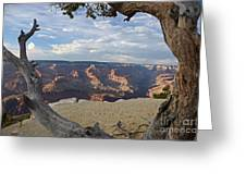 Grand Canyon Tree Greeting Card