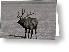Grand Dad Elk Greeting Card