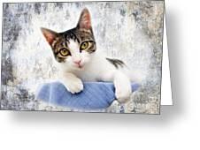 Grand Kitty Cuteness 2 Greeting Card