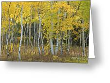 Grand Teton Aspens Greeting Card