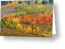 Grand Teton Fall Color Greeting Card