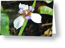 Grande Iris Greeting Card