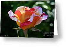 Grandiflora Greeting Card