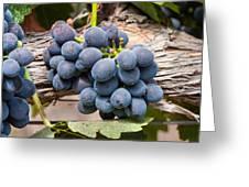 Grape Cluster Vine Greeting Card