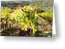 Grape Leaves Greeting Card by Jeremy Woodhouse