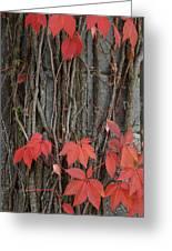 Grape Leaves On Column Greeting Card