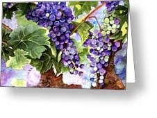 Grape Vines Greeting Card by Karen Casciani