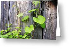 Grape Vines On An Old Barn Greeting Card