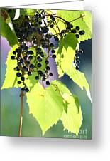 Grapes And Leaves Greeting Card