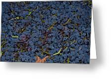 Grapes Greeting Card by Barbara Walsh