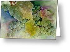 Grapes II Greeting Card by Judy Dodds