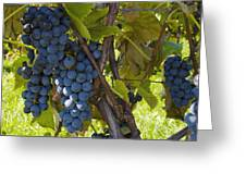 Grapes On A Vine Sutton Junction Quebec Greeting Card
