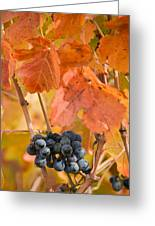 Grapes On The Vine - Vertical Greeting Card