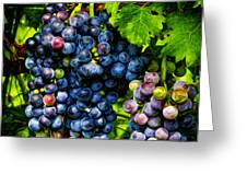 Grapes Ready For Harves Greeting Card