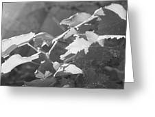 Grapevine In Morning Light Greeting Card