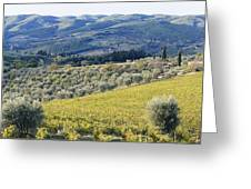 Grapevines And Olive Trees Greeting Card by Jeremy Woodhouse