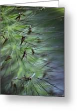 Grass Abstraction Greeting Card