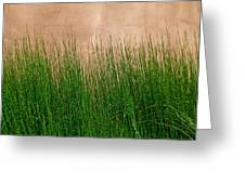 Grass And Stucco Greeting Card