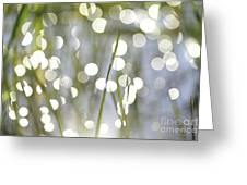 Grass Bokeh Greeting Card