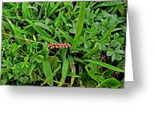 Grass Drops II Greeting Card