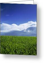 Grass In A Field, Ireland Greeting Card