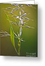 Grass In Flower Greeting Card