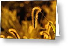 Grass In Golden Light Greeting Card