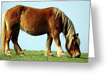 Grass Is Always Greener On The Other Side Greeting Card