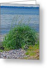 Grass On The Beach Greeting Card