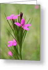 Grass Pink Bouquet Greeting Card